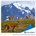 Noticia Patagonia busca Familias